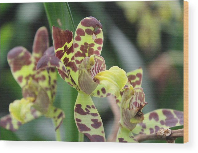 Spots Wood Print featuring the photograph Spot by Sandra Pearsall