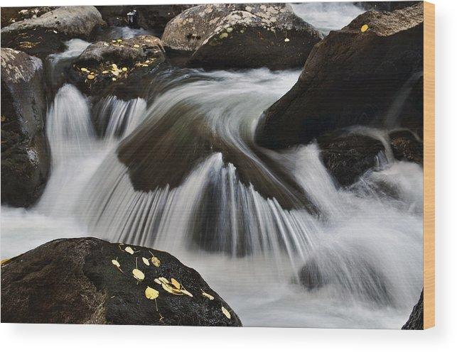 Aspen Leaves Wood Print featuring the photograph Sprague Creek by Frank Burhenn