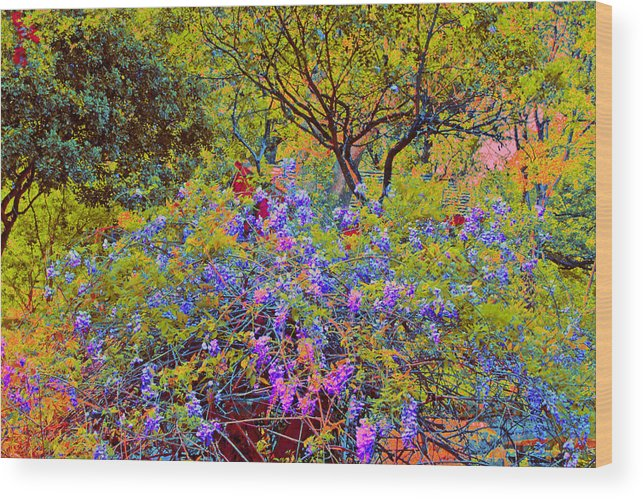 Spring flowers at zilker botanical gardens in austin texas wood flowers wood print featuring the photograph spring flowers at zilker botanical gardens in austin texas by mightylinksfo