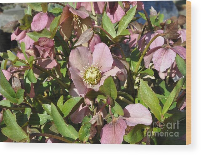 Flowers Wood Print featuring the photograph Springtime Flowers 1 by Frank Williams
