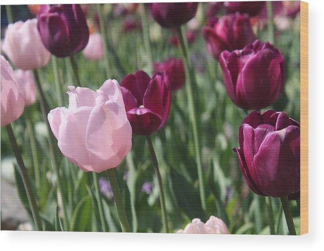 Tulip Wood Print featuring the photograph Springtime Sadness by Alexander Martinez
