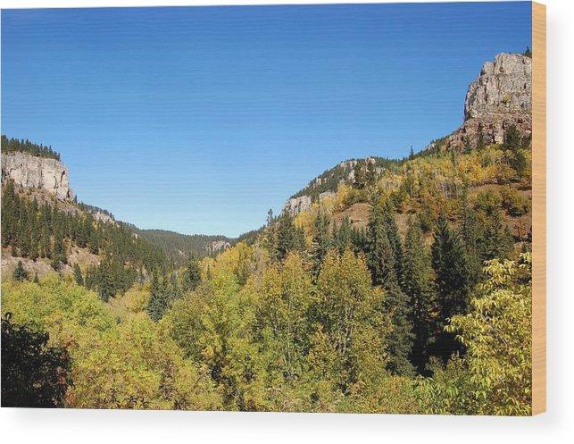 Foliage Wood Print featuring the photograph Starting To Turn by Dakota Light Photography By Dakota