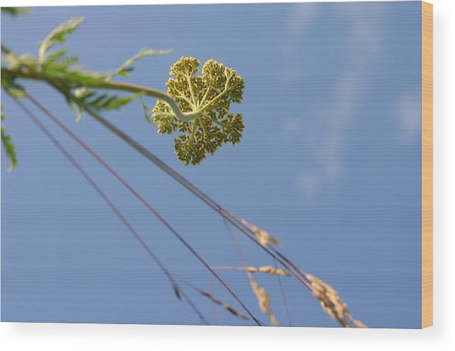 Summer Flowers Wood Print featuring the photograph Summer Flowers And Sky by Vasilisa Moruga
