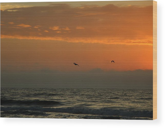 Topsail Wood Print featuring the photograph Sun Up With Birds by Rand Wall