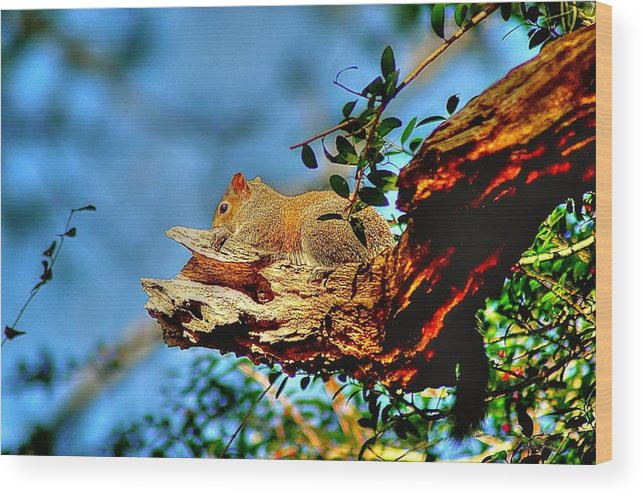 Wood Print featuring the photograph Sunning On My Back Porch by Ed Roberts