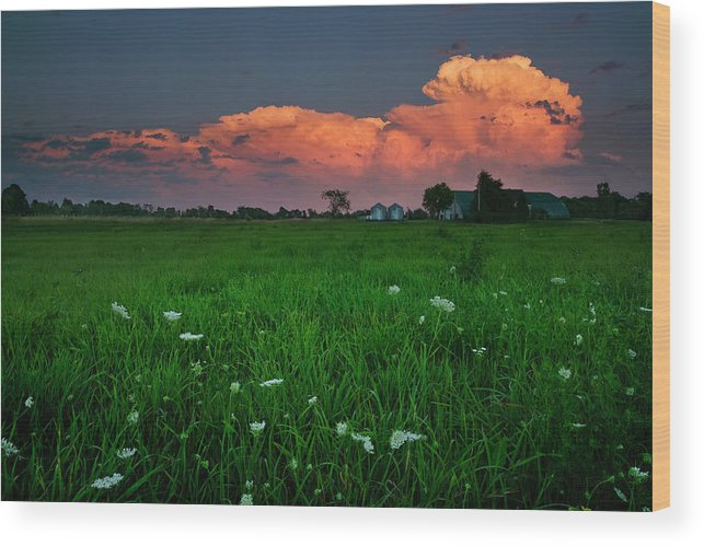 Beauty In Nature Wood Print featuring the photograph Sunset At A Farm Near Hawkesbury by Robert van Waarden