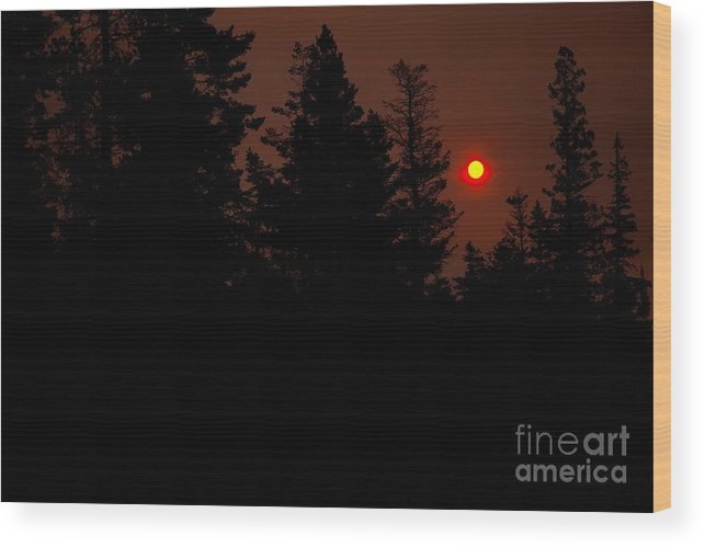 Sunset Wood Print featuring the photograph Sunset On The Pines by Natural Focal Point Photography