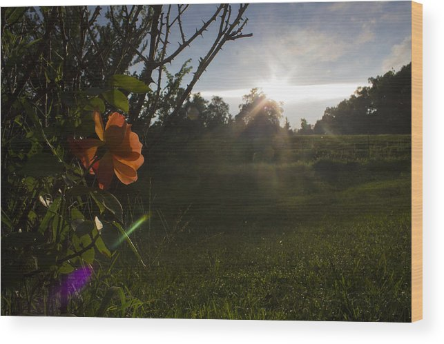 Sunset Wood Print featuring the photograph Sunset Roses by Jake Revolt