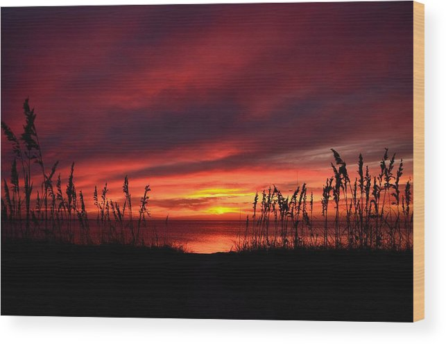 Sunset Wood Print featuring the photograph Sunset Through The Sea Oats by Ken Claussen