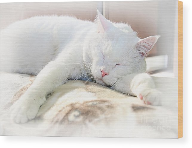 Andee Design Cats Wood Print featuring the photograph Sweet Dreams by Andee Design