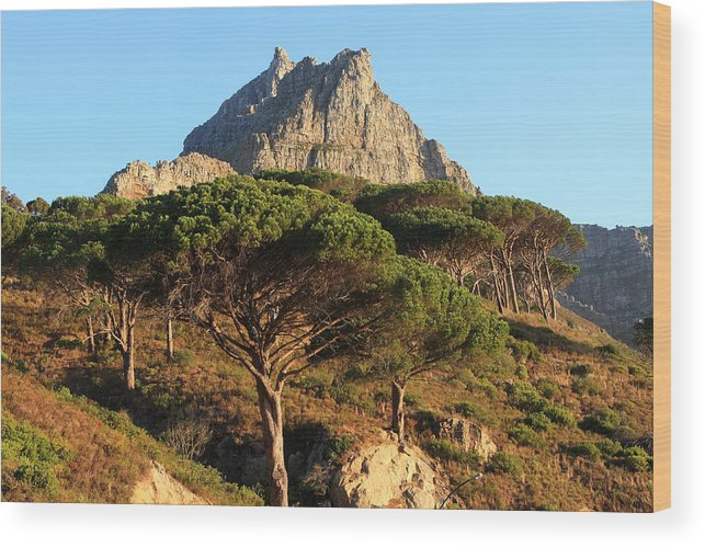Africa Wood Print featuring the photograph Table Mountain View by Aidan Moran