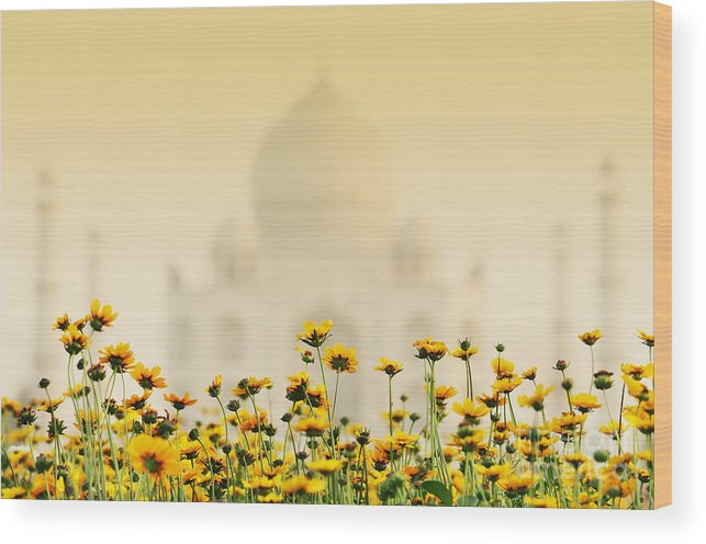 India Wood Print featuring the photograph Taj Mahal by Sorin Rechitan