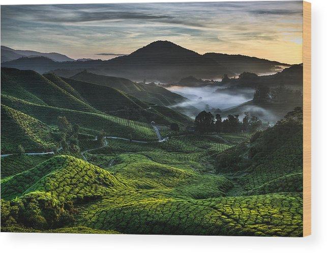 Tea Plantation Wood Print featuring the photograph Tea Plantation At Dawn by Dave Bowman