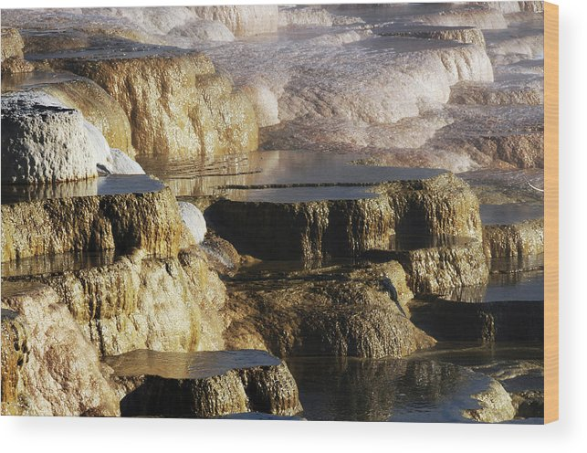 Bacterial Wood Print featuring the photograph Terraces, Mammoth Hot Springs by Michel Hersen