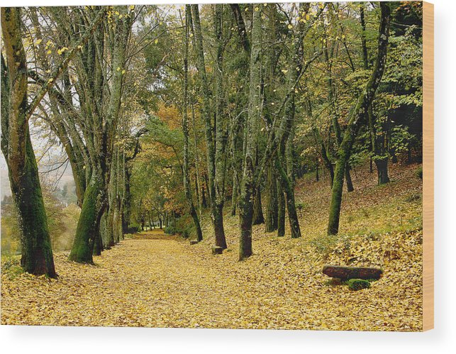 Autumn Wood Print featuring the photograph The Autumn Path by Paulo Monteiro
