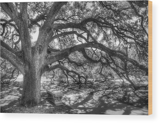 Tree Wood Print featuring the photograph The Century Oak by Scott Norris