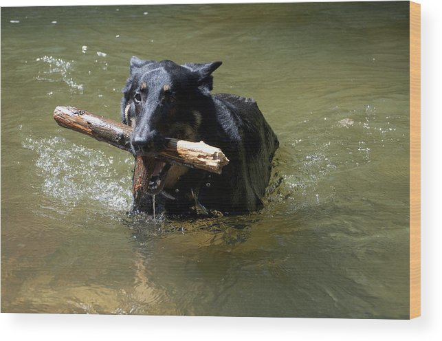 Dog Wood Print featuring the photograph The Dog Days Of Summer by Bill Cannon