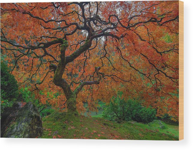 Portland Japanese Garden Wood Print featuring the photograph The Famous Tree At Portland Japanese Garden by David Gn