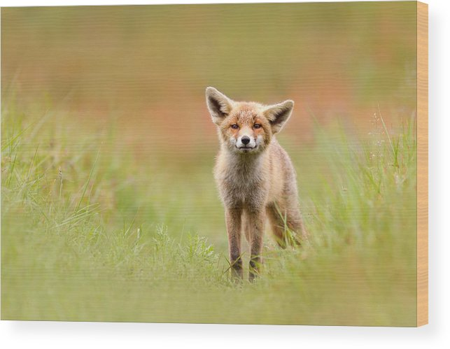 Camouflage Wood Print featuring the photograph The Funny Fox Kit by Roeselien Raimond