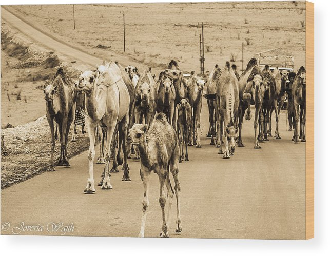 Camels Wood Print featuring the photograph The March Of The Camels by Joveria Wajih