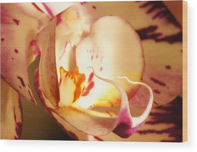 Orchid Wood Print featuring the photograph The Orchid Snake by Bj Hodges