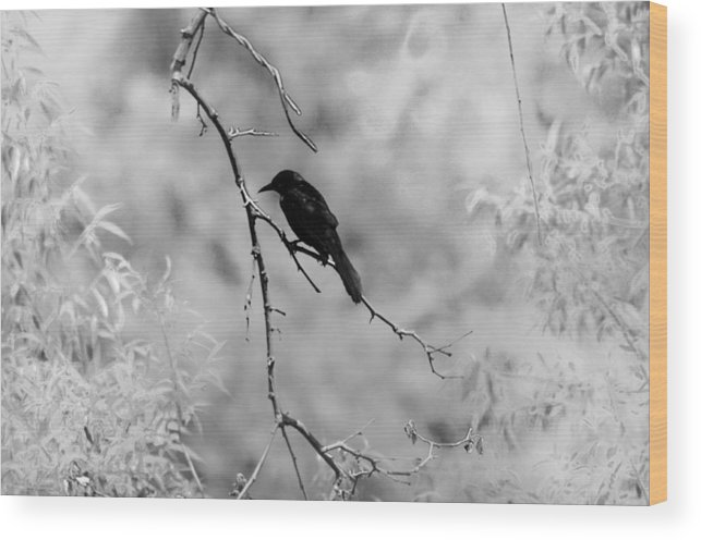 Raven Wood Print featuring the photograph The Raven by Bill Cannon
