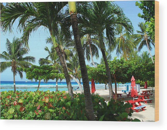 Barbados Wood Print featuring the photograph The Tropics by Catie Canetti