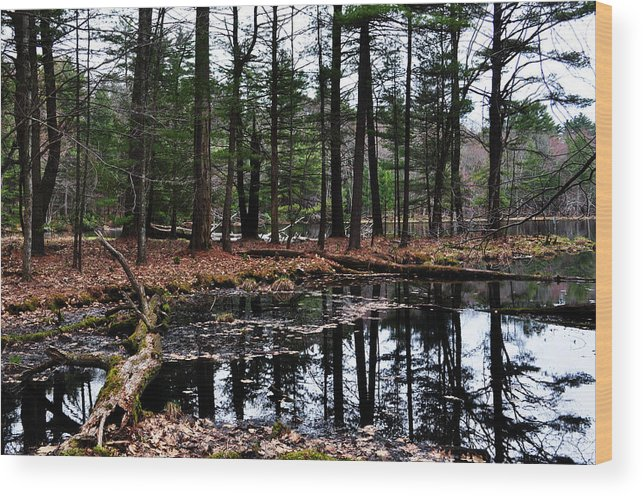 Forest Wood Print featuring the photograph The Woods Reflected by Devin OBrien
