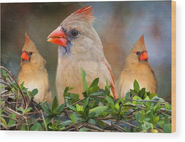 Redbirds Wood Print featuring the photograph Three Little Ladies by Bonnie Barry