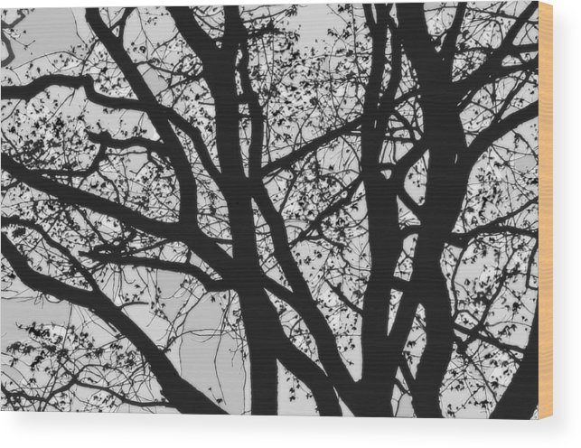 Night Silhouette Wood Print featuring the photograph Tilia Night Silhouette by Yevgeni Kacnelson
