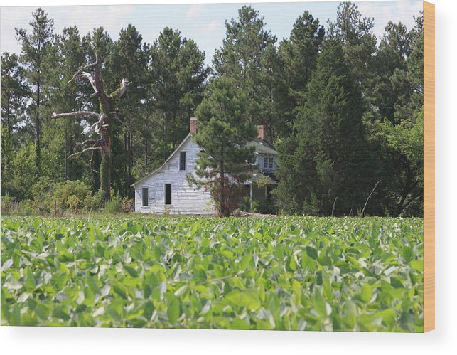 Tobacco Wood Print featuring the photograph Tobacco Road by Andrew Romer