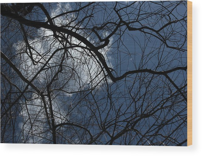 Spring Wood Print featuring the photograph Tree And Clouds by Mary Bedy