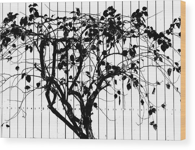 Tree Wood Print featuring the photograph Tree by Charles Garrett
