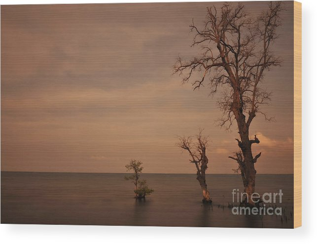 Tree Wood Print featuring the photograph Tree In The Shoreside by Wayan Suantara