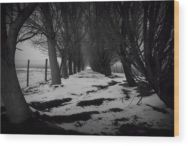 Trees Wood Print featuring the photograph Trees Of The Ida Valley by Amanda Stadther
