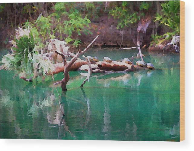 Turtle Florida Scenic Water Spring Natural Wood Print featuring the photograph Turtle Retreat by Alice Gipson