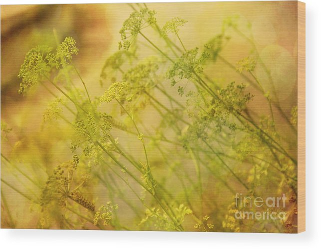 Umbels Wood Print featuring the photograph Umbels With Bokeh by Judi Bagwell