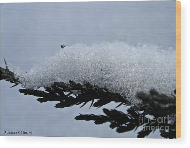 Outdoors Wood Print featuring the photograph Uplifted by Susan Herber