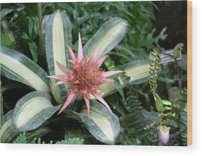 Washington Wood Print featuring the photograph Us Botanic Garden - 121232 by DC Photographer