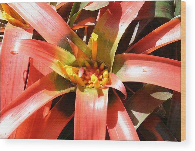 Washington Wood Print featuring the photograph Us Botanic Garden - 12124 by DC Photographer