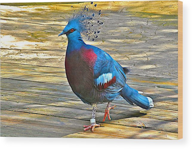 Victoria Crowned Pigeon In San Diego Zoo Safari Park In Escondido Wood Print featuring the photograph Victoria Crowned Pigeon In San Diego Zoo Safari In Escondido-california by Ruth Hager