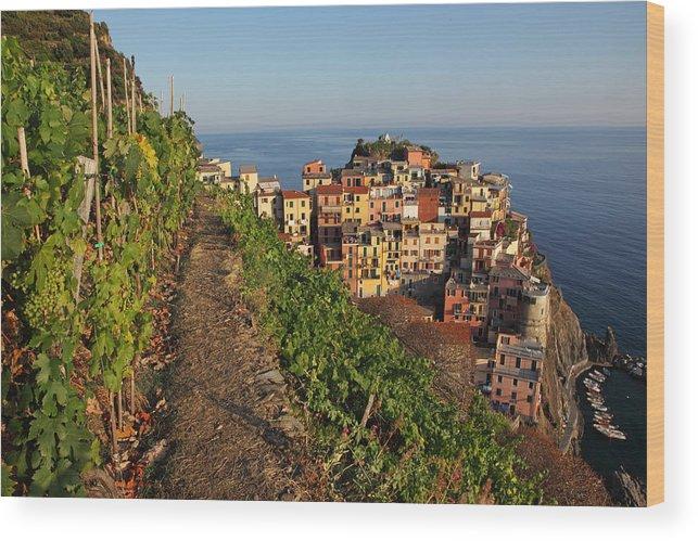 Italy Wood Print featuring the photograph Vineyards Of Manarola by Susan Rovira