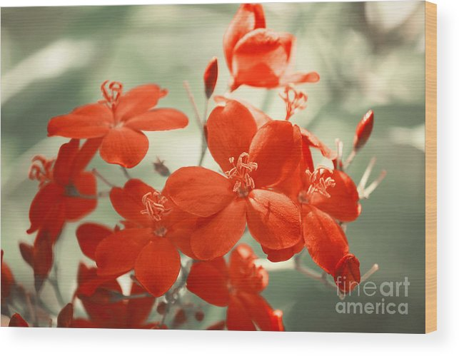 Photography Wood Print featuring the photograph Vintage Red Flowers by Jackie Farnsworth