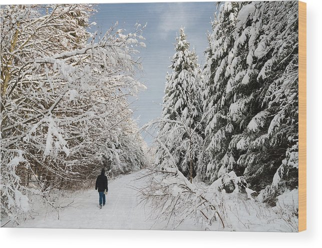 Winter Wood Print featuring the photograph Walk In The Winterly Forest With Lots Of Snow by Matthias Hauser