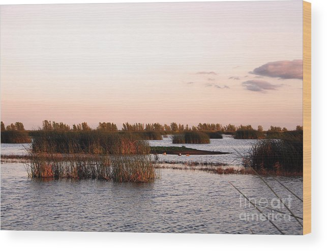 Warm Wood Print featuring the photograph Warm Evening by Juan Romagosa