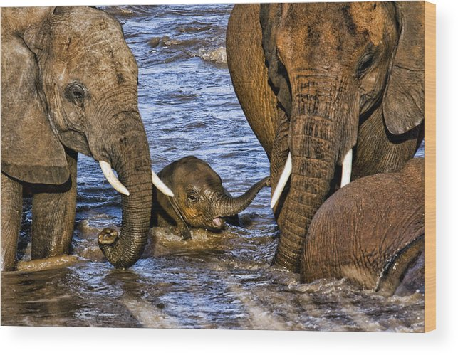 Baby Elephant Elephants Mothers Protective Water Crossing Kenya Africa Wood Print featuring the photograph Watchful Eye by Wendy White