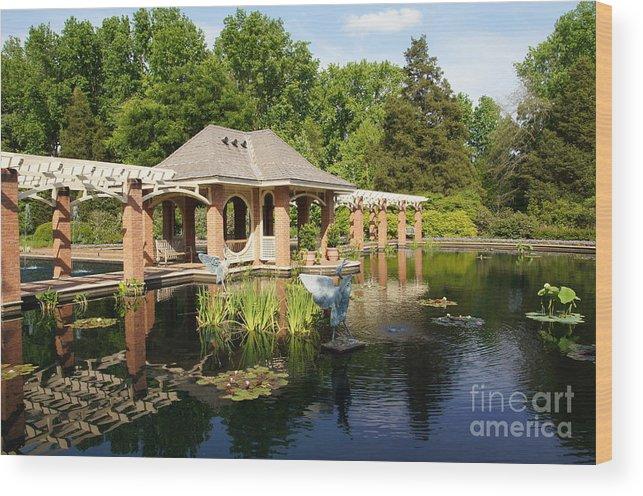 Botanical Garden Wood Print featuring the photograph Water Garden Serenity by Megan Cohen