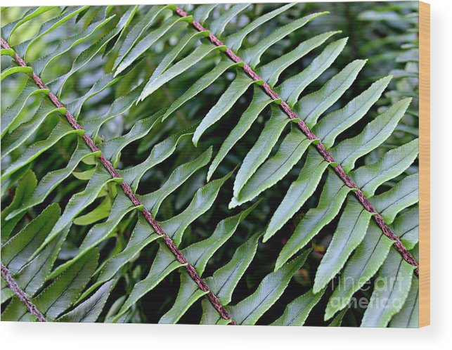 Fern Wood Print featuring the photograph Waves Of Green by Clare Bevan