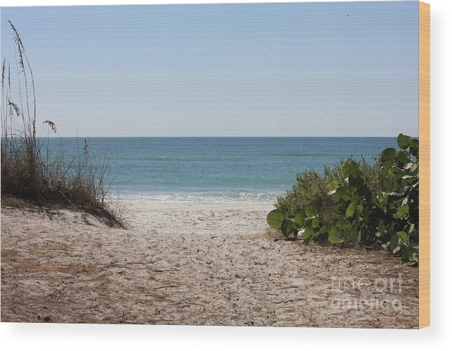 Beach Wood Print featuring the photograph Welcome To The Beach by Carol Groenen