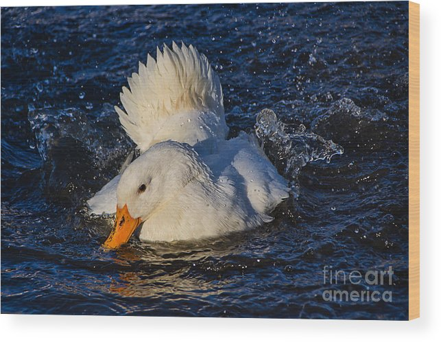 Duck Wood Print featuring the photograph White Duck 3 by Susie Peek